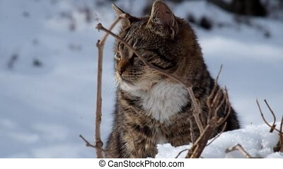 Tabby cat sits in the snow and is very worried