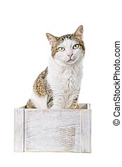 Tabby cat sitting in a wooden box and looking curious to the camera. Isolated on white background.