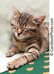 Tabby cat sleeps on bed