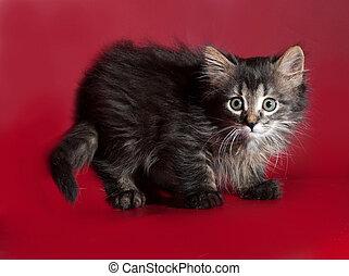 Tabby cat standing on burgundy