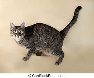 Tabby cat standing on yellow