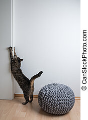 tabby domestic shorthair cat scratching on door frame and wall