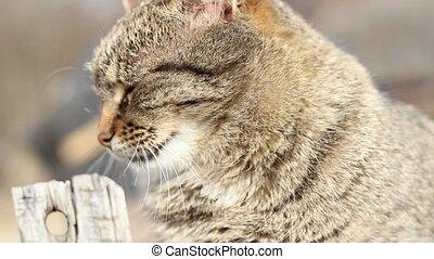 Tabby Cat - Tabby cat portrait with short depth of field.
