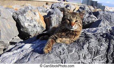Tabby cat - Lovely cat lying on the rocks