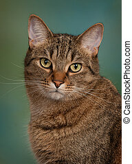 tabby cat with green background