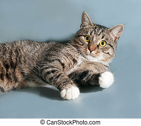 Tabby cat with yellow eyes lying on gray