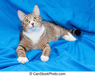 Tabby cat with yellow eyes lying quietly