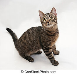Tabby cat with yellow eyes sitting