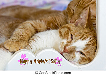 tabby cats snuggling - Tabby cats snuggling with happy...
