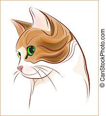 tabby, chat gingembre, dessiné, portrait, main