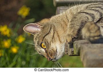 tabby kat, is, het liggen, op, een, bankje