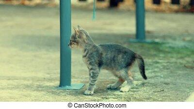 Tabby kitte play alone handheld shot