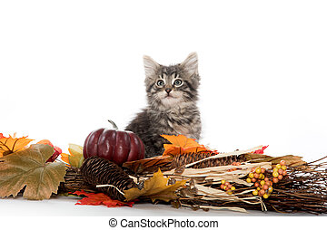 Tabby kitten and fall decorations