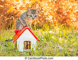 tabby kitten in the green grass standing on the toy house