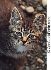 Tabby kitten looking at the camera