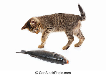 Tabby kitten looks at a sea bass fish on white background -...