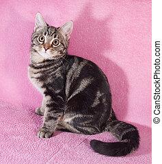 Tabby little kitten sitting on sofa
