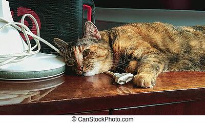 Tabby sleepy cat lies on furniture