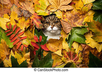 tabby white cat with colorful autumn leaves portrait