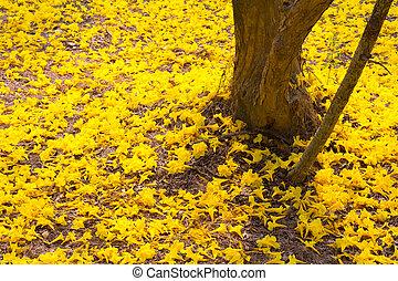 arbre fleurs jaune tabebuia tabebuia printemps arbre jaune tha lande fleurs. Black Bedroom Furniture Sets. Home Design Ideas