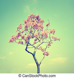 Tabebuia chrysotricha pink flowers blossom in spring