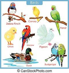 tabel, kleurrijke, vogels