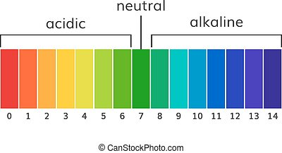 tabelle, ph, alkalisch, und, säurehaltig, skala, vektor