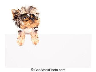 tabellone, tonalità, cane, sopra