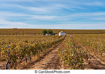Tablas de Daimiel National Park, Castilla la Mancha, Spain