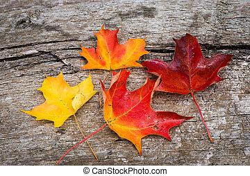table bois, feuille, érable, automne