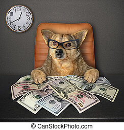table, dollars, chien, 3