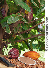 Table with colorful cacao pods
