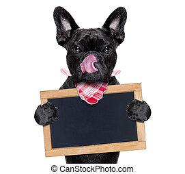 tableau noir, affamé, chien