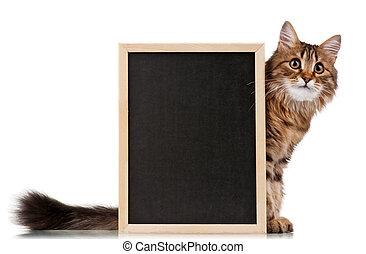 tableau noir, chat