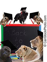 tableau noir, et, africaine, animaux