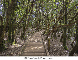 tablero de madera, senda, en, sendero, de, los, sentidos,...