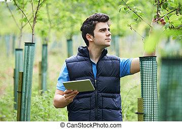 tablette, prüfung, arbeiter, junger, bäume, forstwirtschaft,...