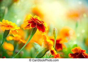 tagetes, マリーゴールド, flower., 秋, 花, 背景