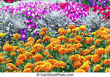 Tagetes flower on a bed