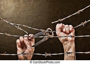 taggtråd, med, räcker