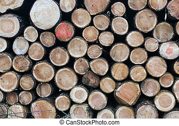 taglio, albero, piccolo, mucchio legno, abete rosso, tronchi