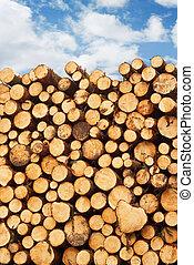 taglio, legname, mucchio, frescamente