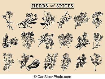 tags., épices, botanique, set., cosmétique, main, herbes, illustrations, médicinal, officinalis, cartes, dessiné, plants., etc.