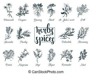 tags., especias, botánico, set., cosmético, mano, hierbas,...