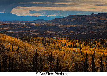 Taiga in Fall - Fall-colored boreal forest (taiga) in Yukon...