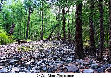 Taiga: the so-called mountain forest in Central Asia