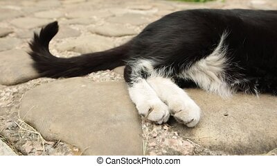 Tail and paws of a lazy black and white cat resting on paving stones.