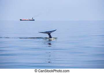 tail fin whale - Tail fin of Bryde's whale in gulf of...