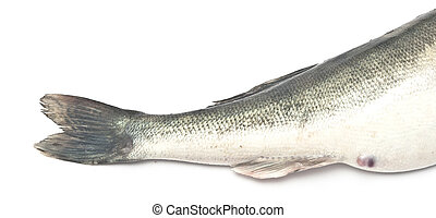 tail fish isolated on white background