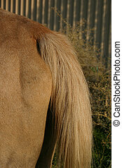 Tail - Horse tail